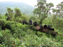 El Centro de Investigación Karisoke ™ es actualmente la mejor esperanza del mundo para la supervivencia de los gorilas de montaña en peligro de extinción y su hábitat ecológico crítico.