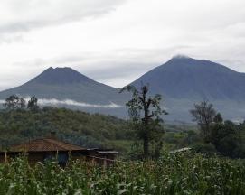 Dian Fossey fundó el Centro de Investigación Karisoke ™ el 24 de septiembre de 1967, en el Parque Nacional de los Volcanes de Ruanda entre el monte Karisimbi y el monte Visoke.