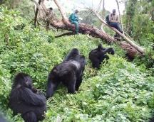 La década de 1990 fue un período particularmente difícil para Karisoke ™ como guerra civil, genocidio y más guerra civil devastó Ruanda y obligaron al personal a evacuar varias veces.
