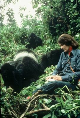 En 1967 fundó el Centro de Investigación de Karisoke, su lugar de estudio, el cuál se convirtió en centro internacional de investigación sobre los gorilas.